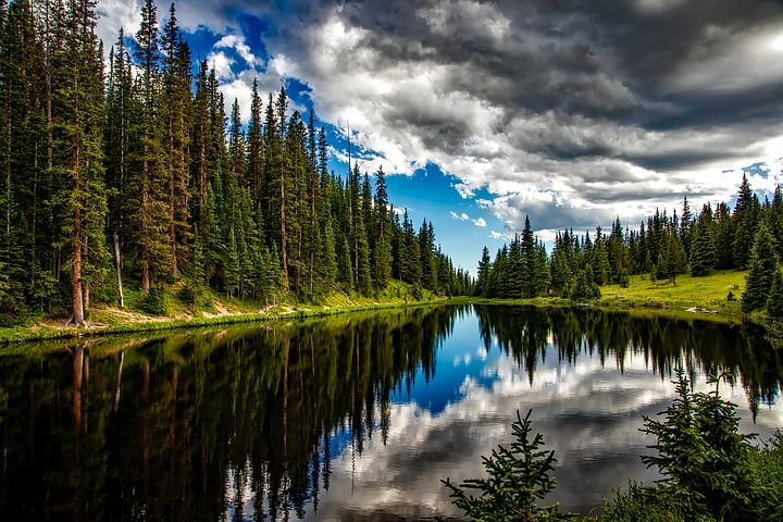 bosques-demadera